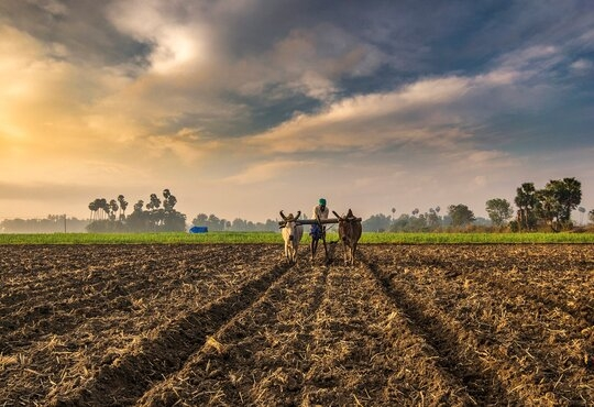 Bayer Crop Science Includes BigHaat For Last Mile Delivery